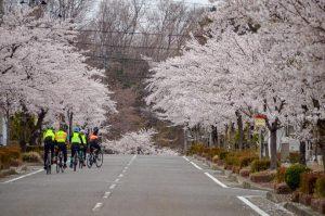 Trans-Tohoku SAKURA tour has just started